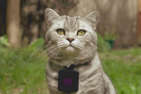 Catstacam -- wearable para que los gatos suban fotos a Instagram