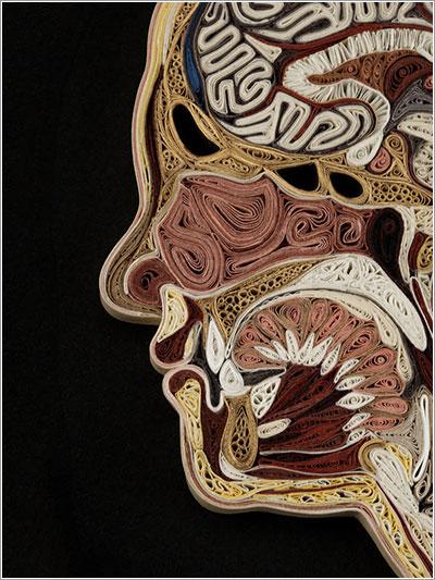 Corte anatómico en papel doblado por Lisa Nilsson