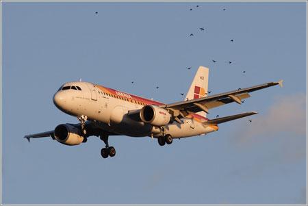 A319 EC-HGT y bandada de pájaros