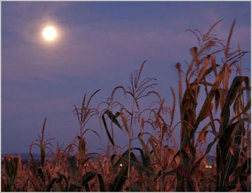 La luna de la cosecha de 2009 por Catalin M. Timosca