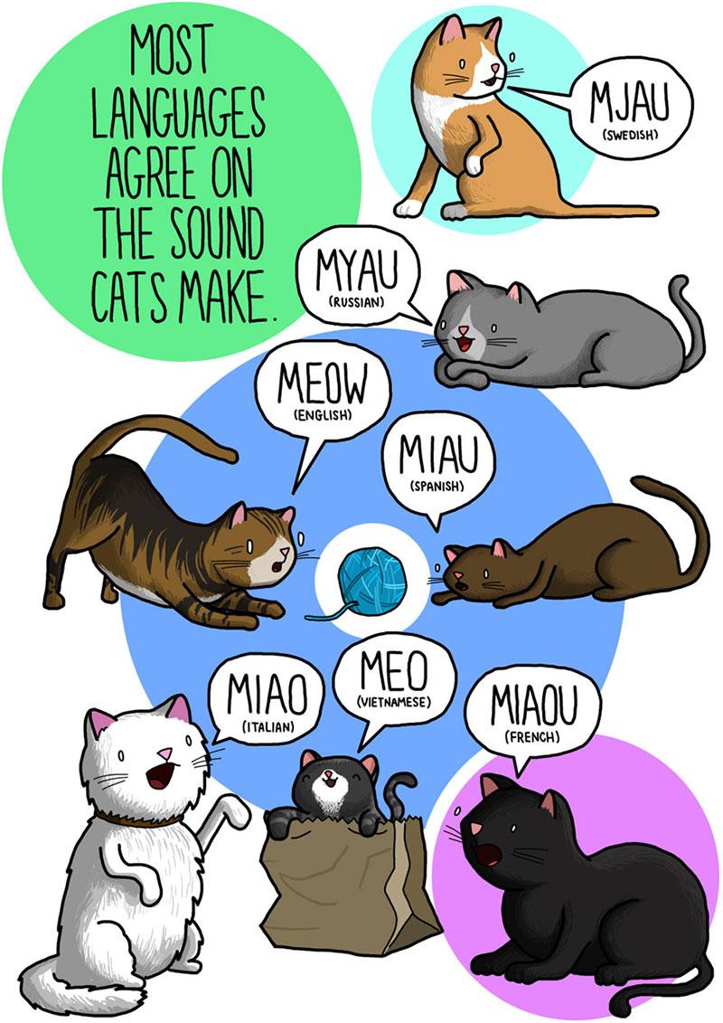 Miau por el mundo adelante