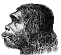 Neanderthaler Fund / Wikipedia Commons