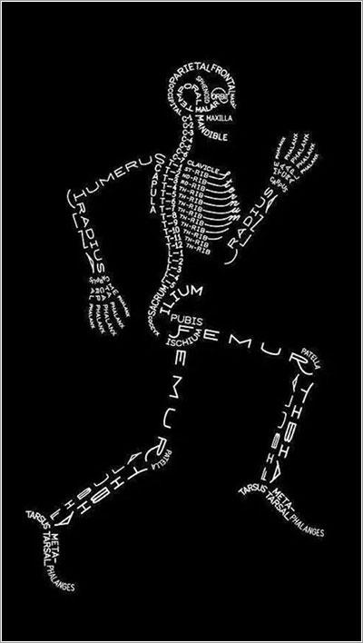 Cada hueso del cuerpo humano, o casi, con su nombre, en una ilustración