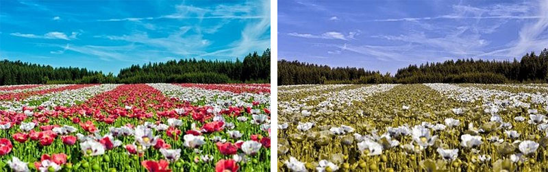 Visión normal vs deuteranopia