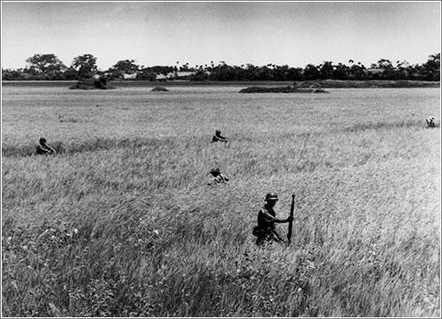 Soldados vietnamitas avanzando por un arrozal