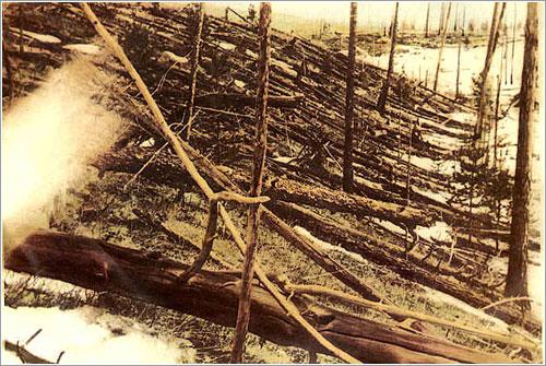 Árboles caídos en la zona