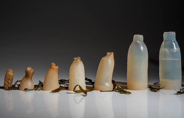 Algae-Water-Bottle-By-Ari-Jonsson