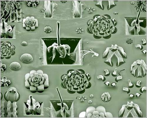Arte Microscopico con nanotubos