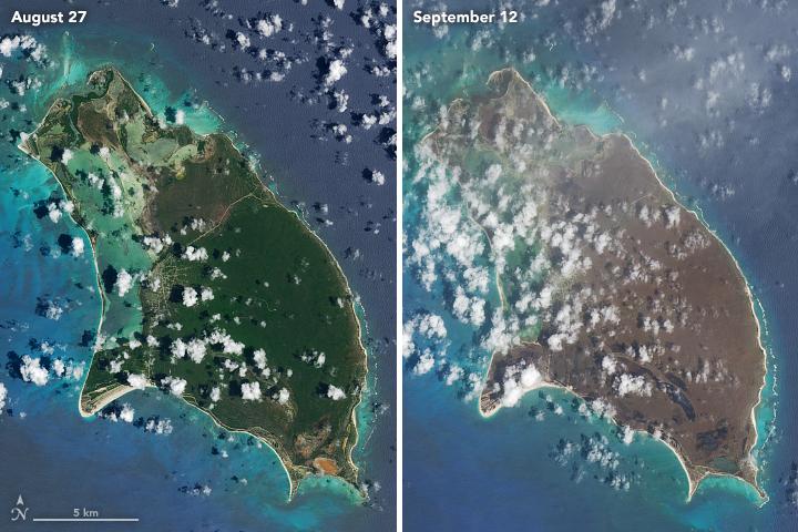 Barbuda oli 2017255