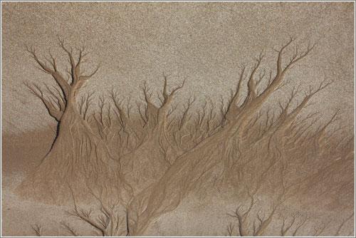 El bosque de arena / Ángel Febrero