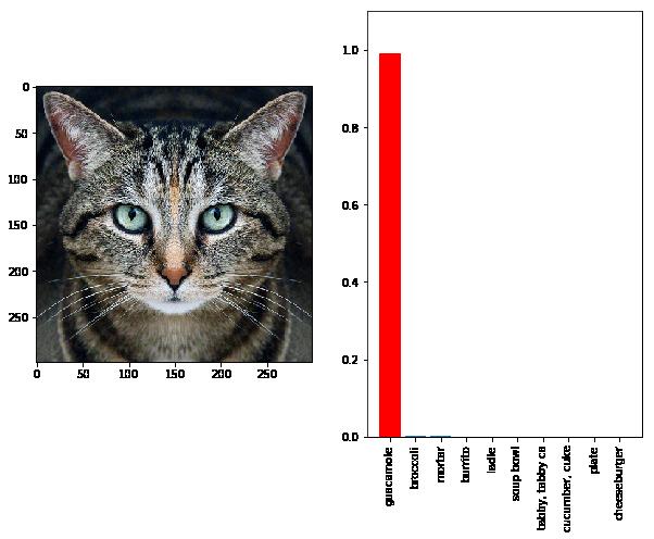 Cat adversarial