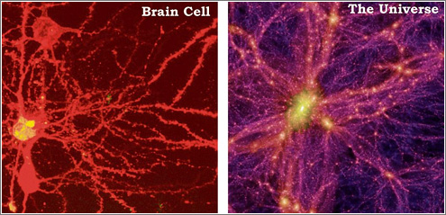 Neurona vs. Universo