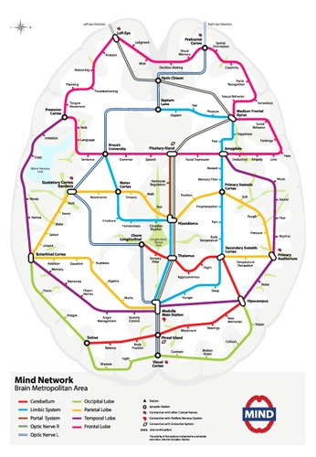 cerebro-como-plano-de-metro.jpg