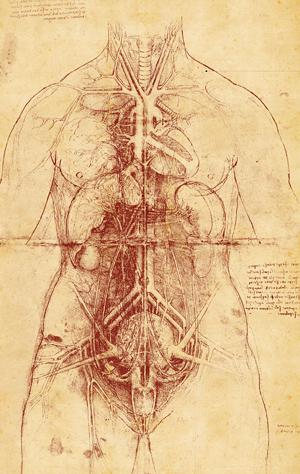 Cuerpo-Humano-Da-Vinci-1507