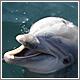 Dolphin Encounter (CC) Ste Elmore @ Flickr