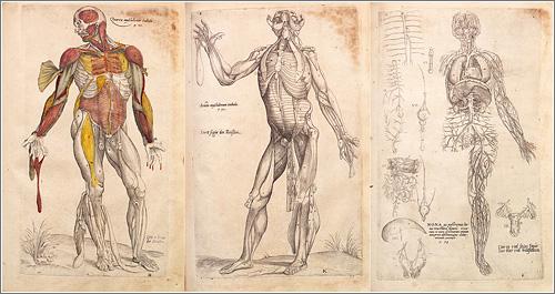Dibujos Anatomia de Andrés Vesalio