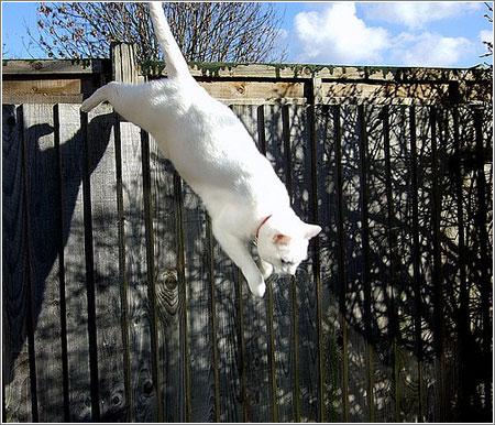 Gato-Cayendo