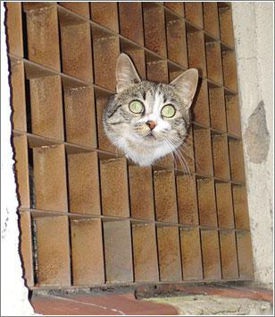 Gato-Cheshire
