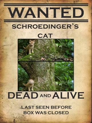 Gato-Schrodinger-Vivo-Muerto