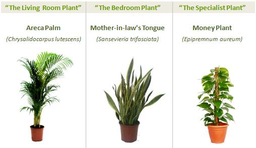 Tres plantas para purificar el aire