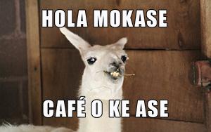 Hola mokase cafe o k ase