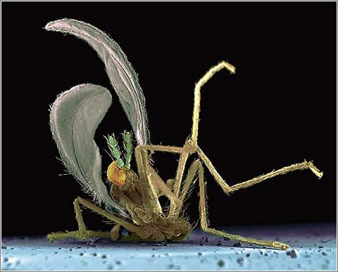 Insectos contra Parabrisas