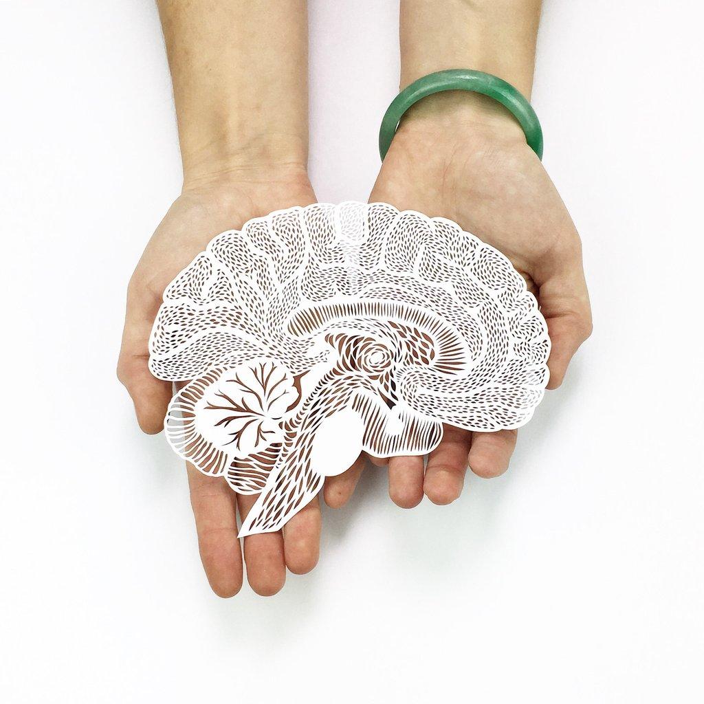Órganos y partes de la anatomía humana recortados en papel ...