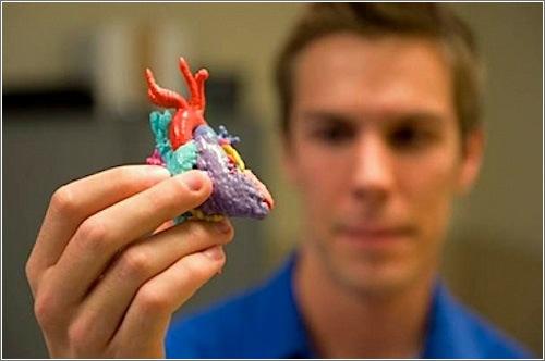 modelos-organos-impresos-3d.jpg