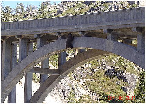 El oso subido al viaducto