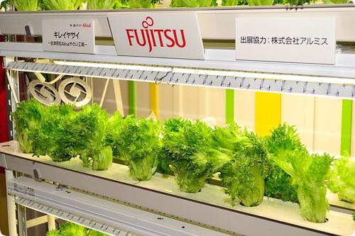 Racks Of Fujitsu Lettuce