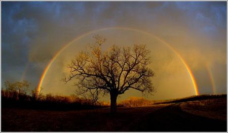 Rainbow Elam