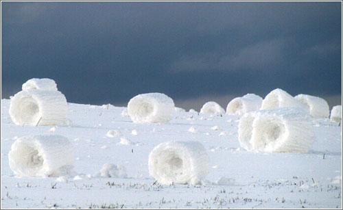 Snow Rollers - Tim Tevebaugh