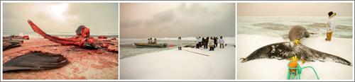 The Whale Hunt (c) Jonathan Harris