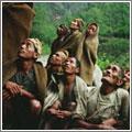 La fiebre del oro (dulce) en las colinas del Himalaya