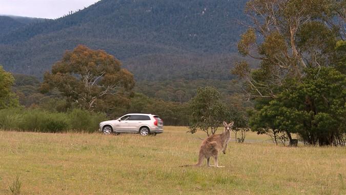Volvo Kangaroo Detection