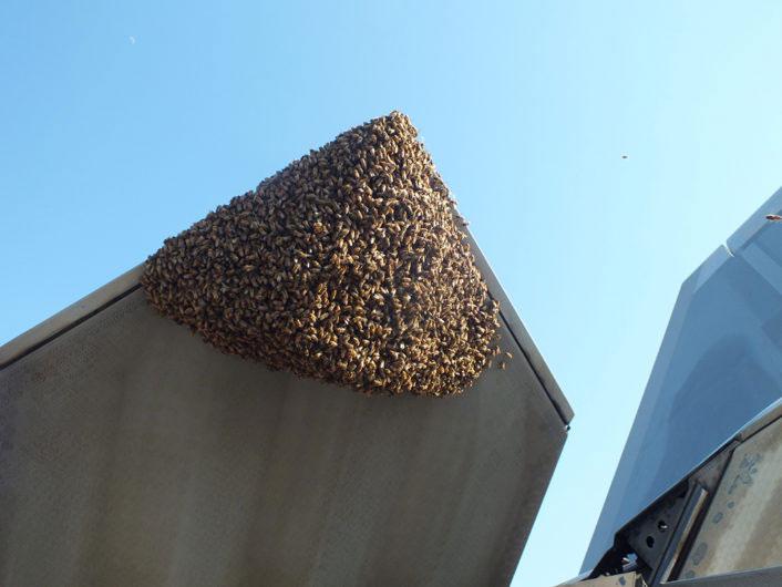 F22 y abejas