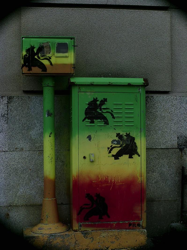 Graybox jamaicana