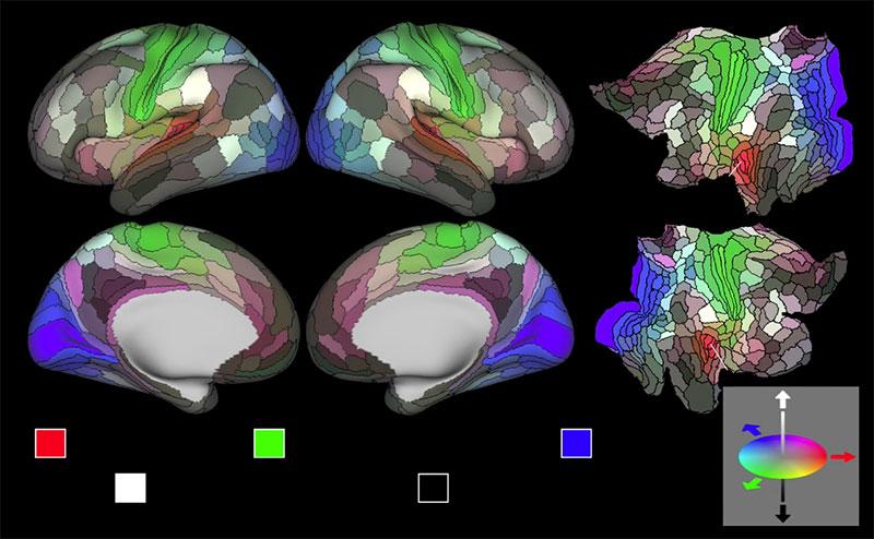 Mapa del cerebro, verano de 2016
