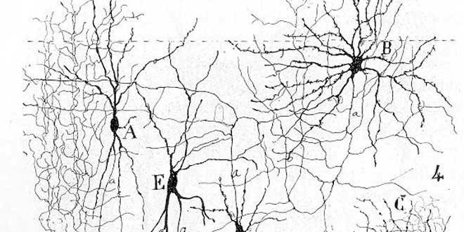 Neuronas dibujadas por Cajal